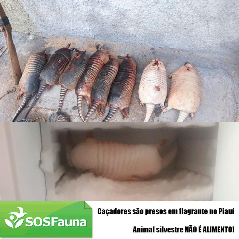 Caçadores são presos em flagrante com animais mortos no Piauí